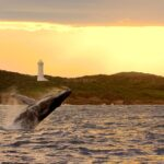 Seeing Whales in Nelson Bay Port Stephens | whale watch cruise Port Stephens