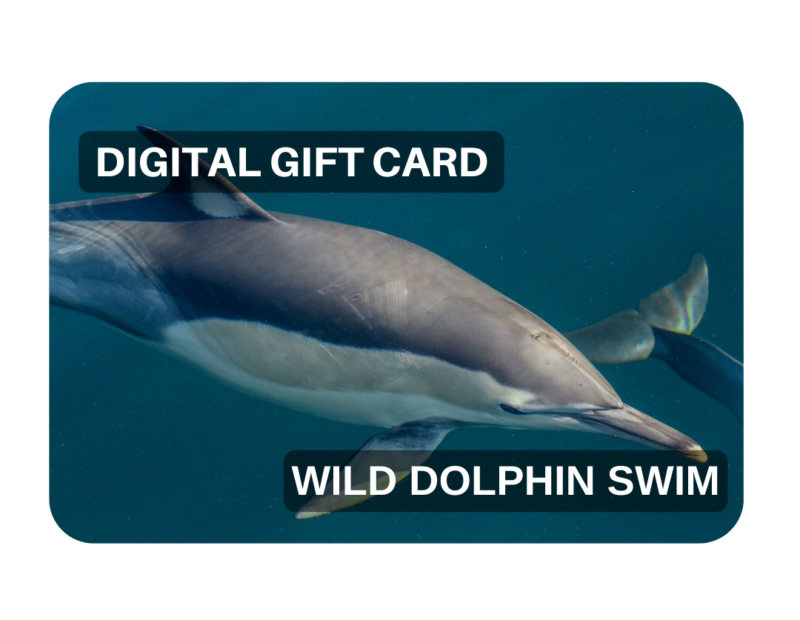Swimming with Wild Dolphins Port Stephens NSW or Nelson Bay